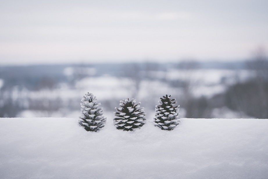 Snow over pinecones and Kansas horizon