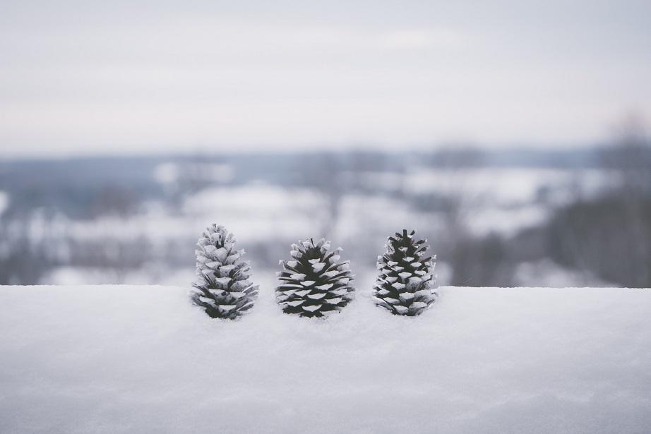 Snow over pinecones and Kansas horizon
